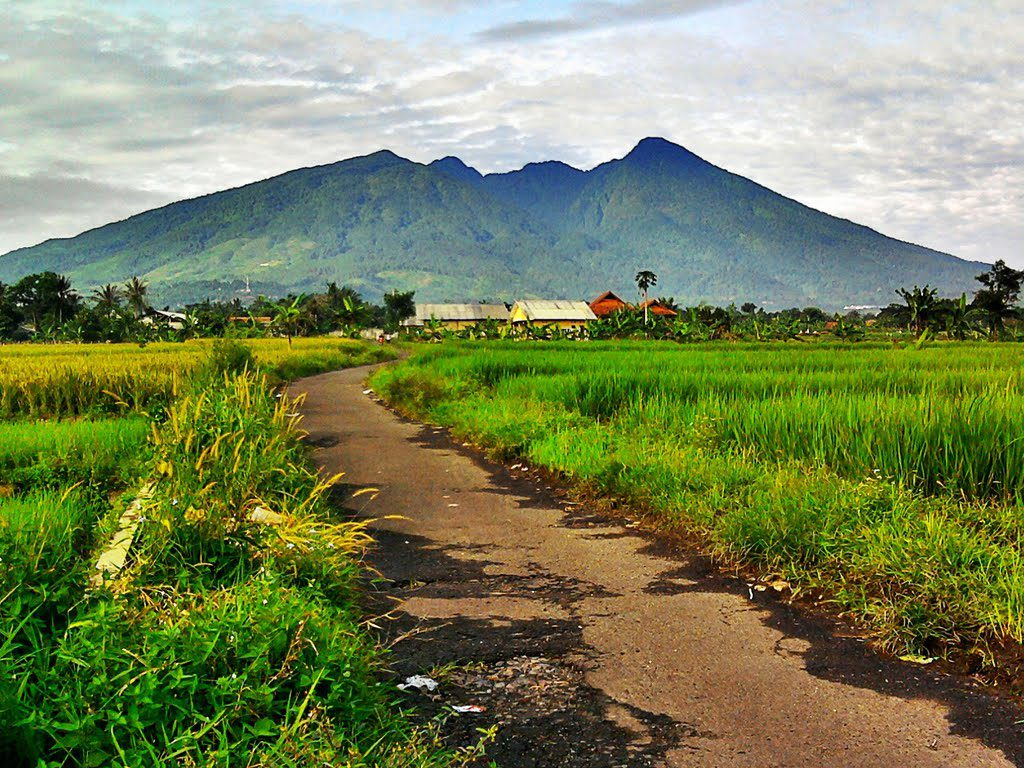 Heading To Bogor 4 Incredible Things To Do